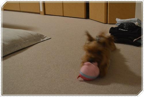 動物ころりんDSC_0767-20140911