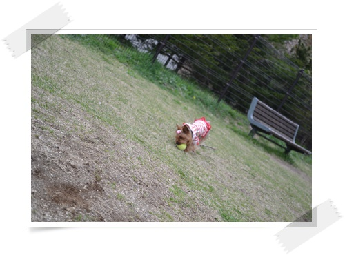 byouinDSC_0924-20140426.jpg