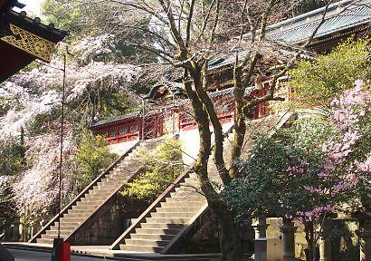浅間神社枝垂れ桜画像-2