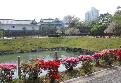 つつじ・さつき咲く駿府城公園-2
