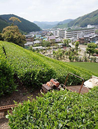 新間の茶畑画像-5