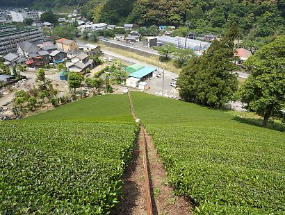 新間の茶畑画像-6