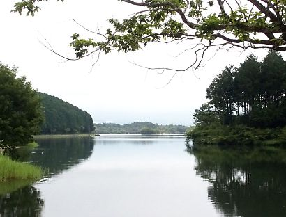 夏の田貫湖-5