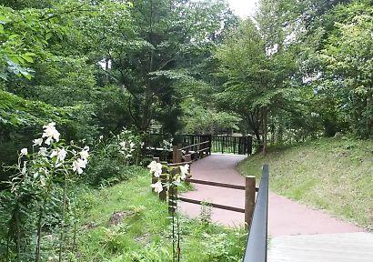 夏の田貫湖-6