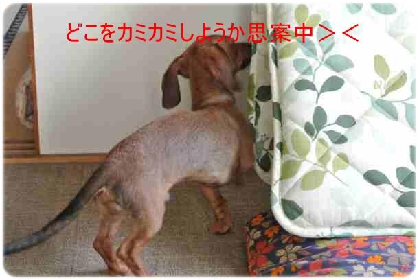 DSC_2354.jpg