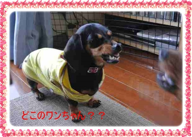 DSC_3559_20140623195103530.jpg