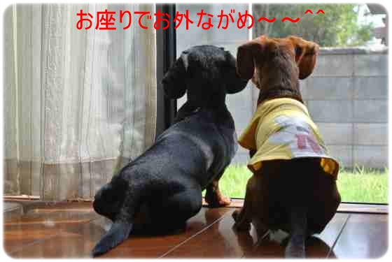 DSC_3584.jpg