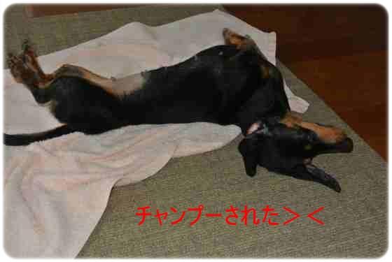DSC_3610.jp<br />g