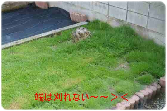 DSC_4631.jpg