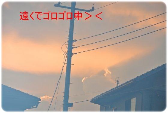 DSC_5195.jpg