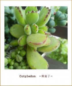 photo753.jpg