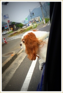 photo830.jpg