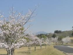 もうすぐ桜見頃塘之池公園 CBR250R 4