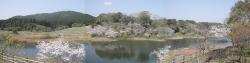 もうすぐ桜見頃塘之池公園 CBR250R 6