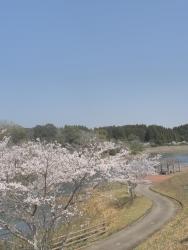 もうすぐ桜見頃塘之池公園 CBR250R 7