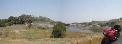 もうすぐ桜見頃塘之池公園 CBR250R 8