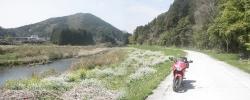 桜満開こせ渓谷 こせの滝魚道 CBR250R 4