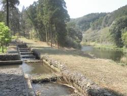 桜満開こせ渓谷 こせの滝魚道 CBR250R 3