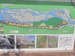 s-桜満開こせ渓谷 こせの滝魚道 CBR250R 6