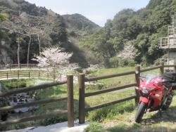 s-桜満開こせ渓谷 こせの滝魚道 CBR250R 11