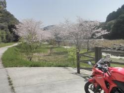 s-桜満開こせ渓谷 こせの滝魚道 CBR250R 19
