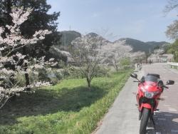 s-桜満開こせ渓谷 こせの滝魚道 CBR250R 22