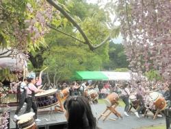 s-和気神社 和気公園藤まつり2014_3
