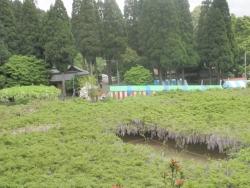 s-和気神社 和気公園藤まつり2014_11