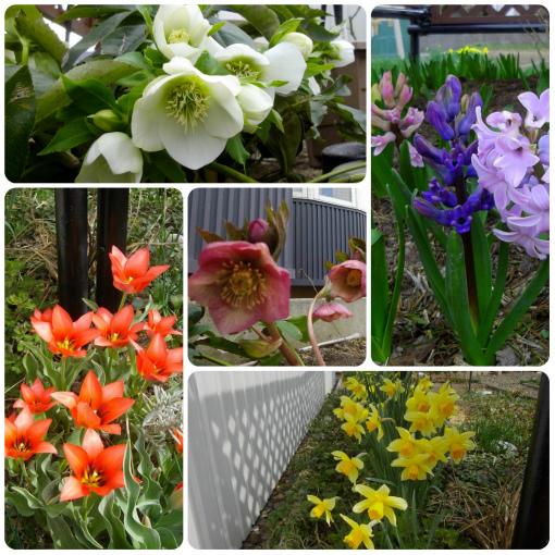 s-449-春の花