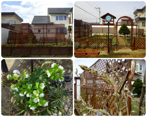 s-451-2ウチの庭