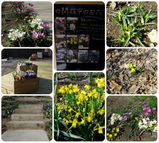 s-453-04開花中のお花