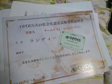 P1050570.jpg