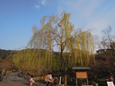 丸山公園-1