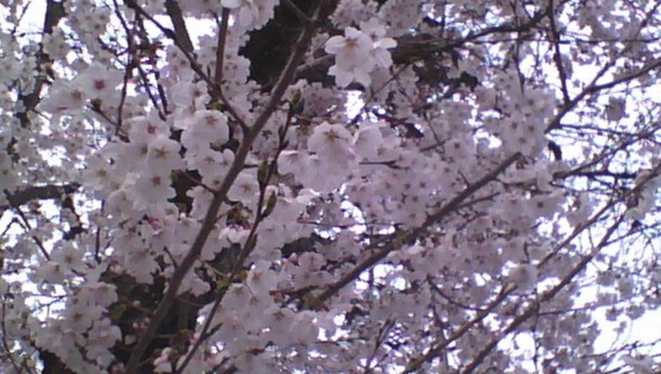 2014-03-31-154230_1.jpg