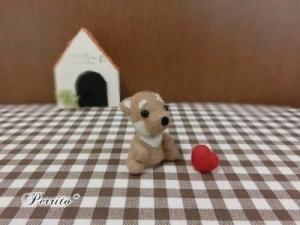 6月柴犬2