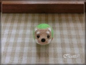 7月柴犬ボール1