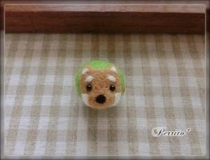 7月柴犬ボール2
