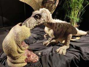 2014年8月恐竜展3