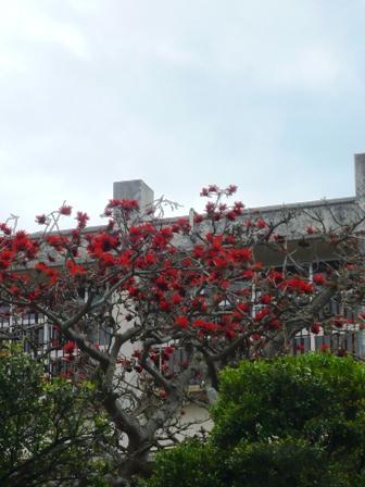 4月2日:デイゴの花