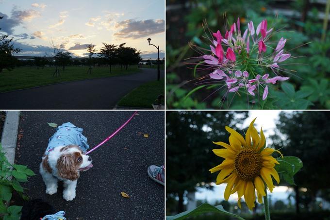 blog-DSC03771.jpg