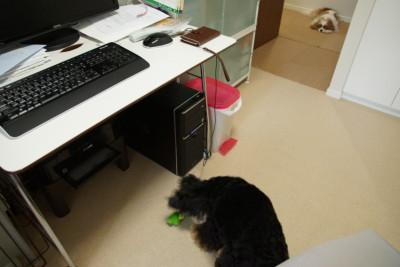 blog-DSC03886.jpg