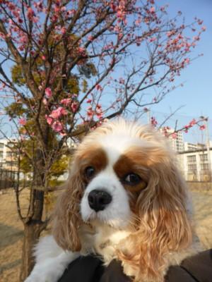 blog-P1000659.jpg