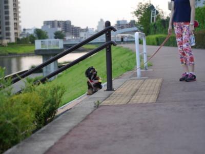 blog-P1270523.jpg