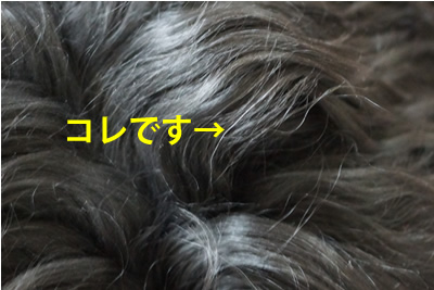 blogDSC01516.jpg