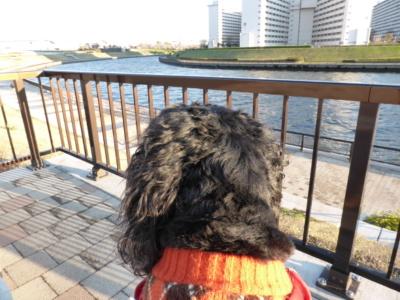 blogP1020454.jpg