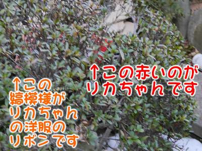 blogP1170881-2.jpg