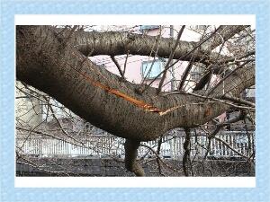 fc2_2014-02-20_10-39-07-253.jpg