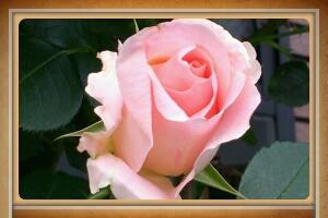 fc2_2014-05-13_17-25-25-504.jpg