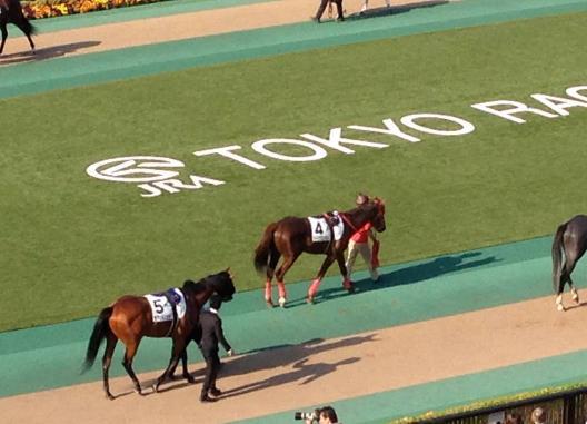 東京競馬5
