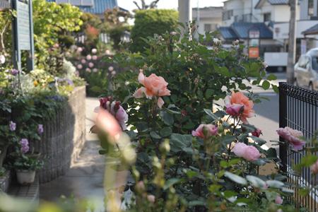 風景2014511-15